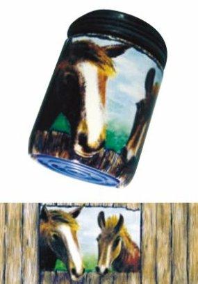 AquaClic Cavalli curiosi